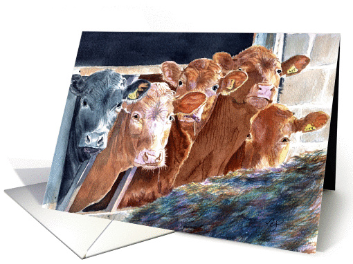 Calves at Brunch card (58838)