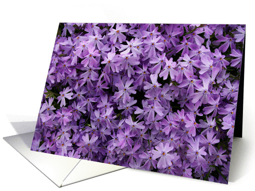 get well soon: purple phlox card (133338)