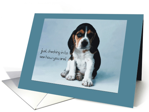 Thinking of You, Dog, Beagle Puppy card (148862)