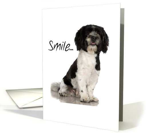 Smile ... Havanese dog card (234986)