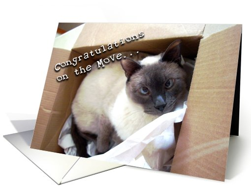 Congratulations New Home Cat In Box card (606316)