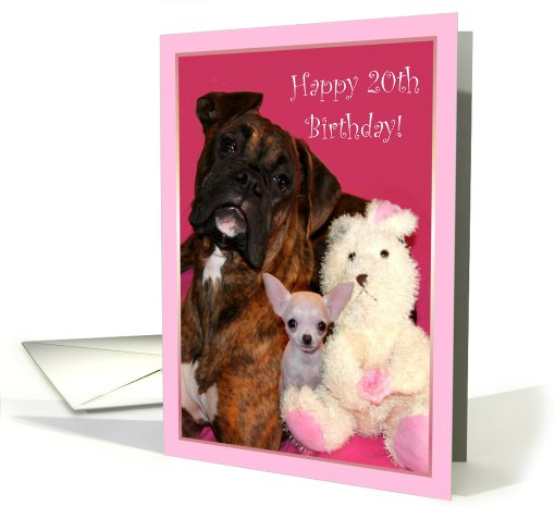 Happy 20th Birthday Boxer and Chihuahua card (544166)