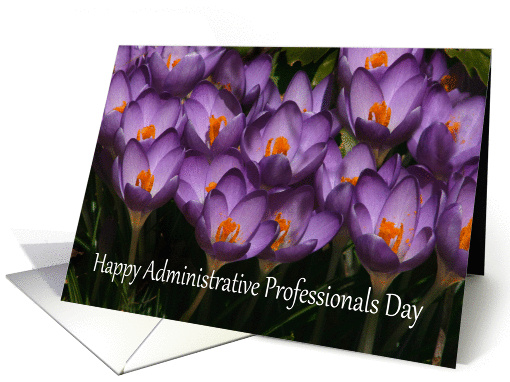 Happy Administrative Professional's Day crocus card (460639)