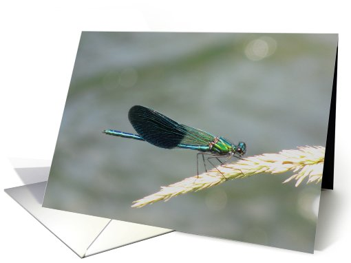 green and blue damselfly card (497751)
