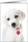 Valentine's Day Puppy With Red Heart Dog Tag