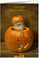 Cat Humiliated in Halloween Jack o'lantern for college student card
