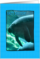 Birthday - Manatee card