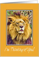 Thinking Of You - Lion card