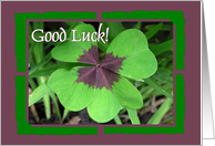 Good Luck - Four Leaf Clover card