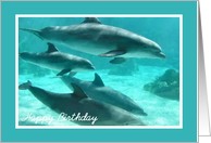 Birthday - Dolphins card