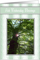 Ash Wednesday - Sun In Tree card