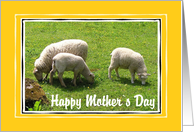 Mothers Day - Ewe & Lambs card