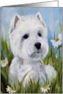 Westie West Highland Terrier Dog -In the Daisies card