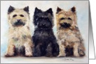 Three's Company Cairn terrier puppies blank note card