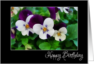 birthday purple and white pansies card