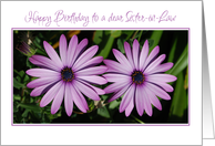 sister-in-law birthday, pink flowers card