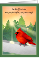 Red Cardinal in Sunlight Sympathy Card