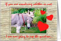 Donkey Marriage Proposal Humor card