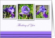 Thinking of You Purple Flags Floral card