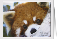 Peek A Boo Panda Mothers Day Cards Paper Greeting Cards
