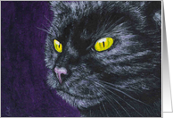 Halloween Party Invitation - Black Cat card