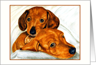 Wedding Anniversary Congratulations Dachshund Doxie Dogs card