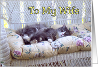Birthday to Wife - Sleeping Kitty Cat card