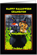 Halloween Grandson - Dachshund Dog Witch Cat Bubbles card