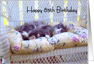 Happy 85th Birthday, grey cat on white wicker chair card
