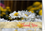 Thank You - White Daisies card