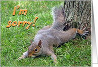 Sorry Squirrel card