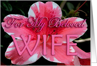 For My Beloved Wife card