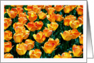 Mother's Day Pastel Tulips card