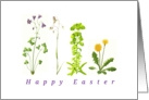 Easter wild flowers delicate simple accurate illustration card