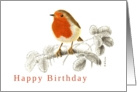 Accurate Robin on Raspberry branch Illustration Birthday Card