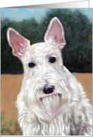 White Scottish Terrier Painting card