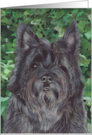 Cairn Terrier Dog Painting card