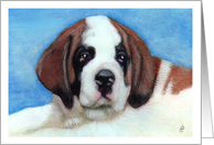 St. Bernard Puppy Announcement Invitation card