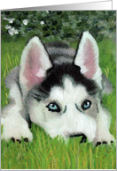 Siberian Husky Puppy Announcement Invitation card