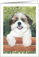Cute Shih Tzu Puppy Announcement Invitation card