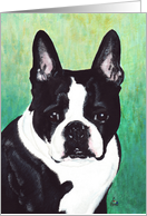 Boston Terrier Dog Announcement Invitation card