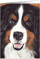 Bernese Mountain Dog Announcement Invitation card