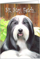 Bearded Collie Dog Party Invitation Get-together card