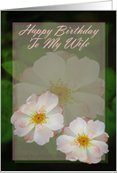 Happy Birthday To My Wife, Two Pink Wild Roses card
