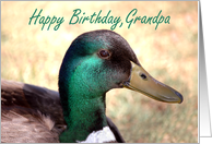 Happy Birthday, Grandpa card