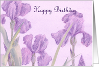 Wife Birthday Card Lavender Iris Garden card