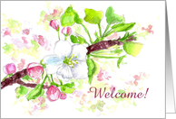 Welcome Apple Blossom Card