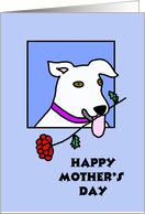 Mothers Day Card from Dog -- A Rose from your White Pooch card