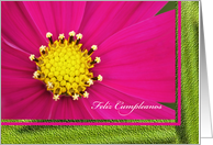 Spanish Happy Birthday (Feliz Cumpleanos) Card -- Pretty Pink Cosmos card