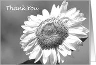 Wedding Party Thank You Card -- Black and White Mammoth Sunflower card